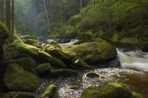 Der neue Bärentrail im Waldviertel: Wild-romantischer Höllfall